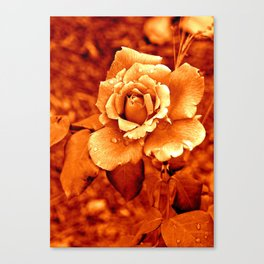 Rose Orange Flower Nature Digital manipulation Canvas Print