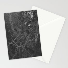 Dark and scary forest Stationery Cards