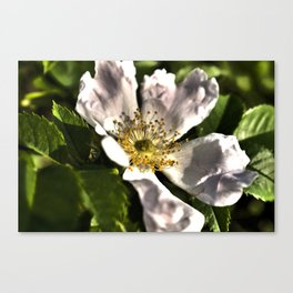 blossom of a tree Canvas Print