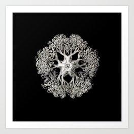 Brittle Star in Black Art Print