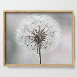 Delicate Dandelion Flower in soft light Serving Tray