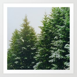 Winter Pine Tree Forest (Color) Art Print