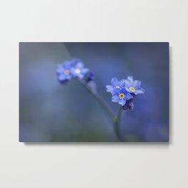 Myosotis Scorpioides - Forget Me Not - Blue Flower Metal Print
