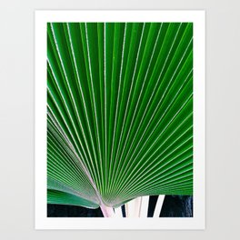 palm study Art Print