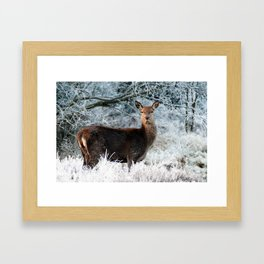 Lone Deer In Winter Framed Art Print