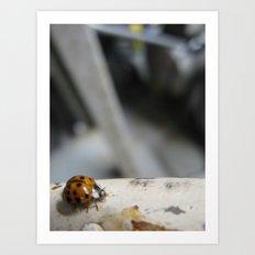 ladybug 1 Art Print