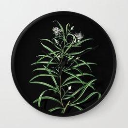 Vintage Narrow Leaved Spider Flower Botanical Illustration on Black (Portrait) Wall Clock