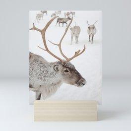 Reindeer With Antlers Art Print   Tromsø Norway Animal Snow Photo   Arctic Winter Travel Photography Mini Art Print