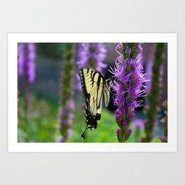 Swallowtail Summer Art Print