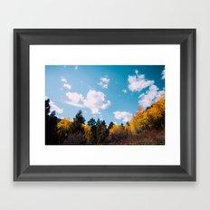 fern lake trails .  Framed Art Print