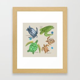 Sea Turtle Types Framed Art Print