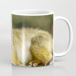Beautiful Black-Capped Squirrel Monkey In A Tree Coffee Mug