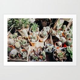 Cacti in London Art Print