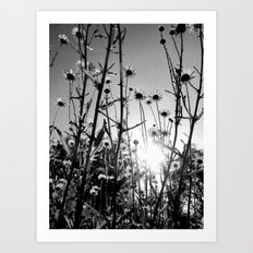 Black and white Daisy garden 5 Art Print