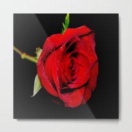 Red_Rose-2 Metal Print