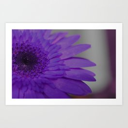 Purple Dahlia Art Print