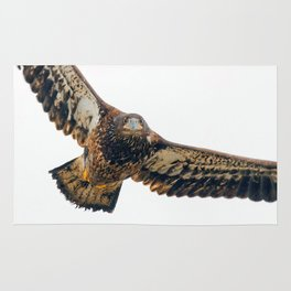 Young Bald Eagle in Breathtaking Flyby Rug