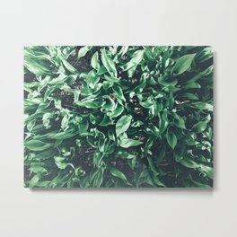 Leaves from the top Metal Print