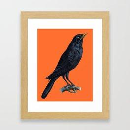 Vintage Raven Framed Art Print
