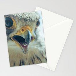 Common Kestrel Portrait Beak Wide Open (Falco tinnunculus) European kestrel. Stationery Cards