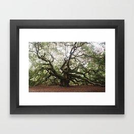 The Angel Oak Framed Art Print