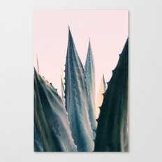 Agave Daydreams Canvas Print