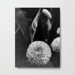 Serene White Flower Metal Print