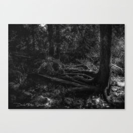 Wicked Tree - Black and White Canvas Print