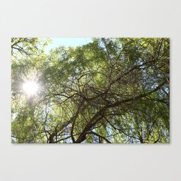Grünes Paradies im Sommer Canvas Print