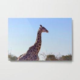 Giraffe Doobie Metal Print