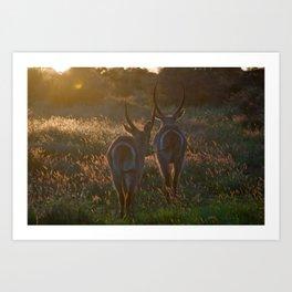 dusk, kruger national park Art Print