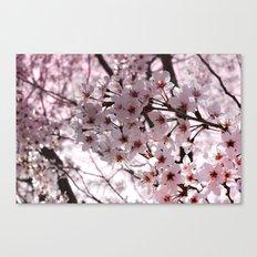 Sakura in Kyoto Canvas Print