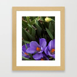 Purple and Orange Framed Art Print