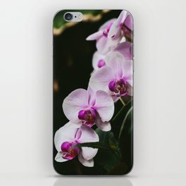White & Purple Orchids iPhone Skin