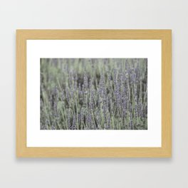 French Lavander Fields Framed Art Print