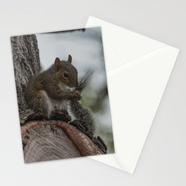 Squirrel Tail Stationery Cards