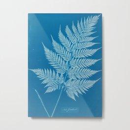 Fern Cyanotype, 1800s Metal Print
