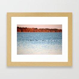 American Coots Crossing Lake Framed Art Print