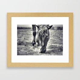 Outer Banks, Corolla, NC, Wild Stallion OBX Framed Art Print