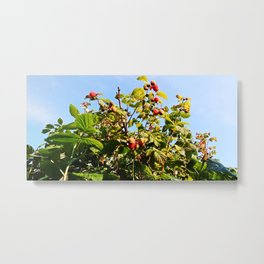 Raspberries reaching for the sky Metal Print