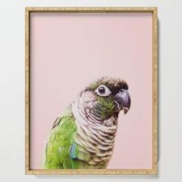Parot Photography | Peek-a-boo | Tropical | Wildlife | Bird | Blush Pink Serving Tray