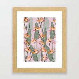 Bird of Paradise - pink Framed Art Print
