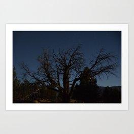 Moon brings life to an old tree Art Print