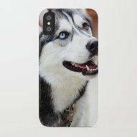 husky iPhone & iPod Cases featuring HUSKY  by Porterhouse LA