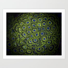 "Corals Zoanthus ""Lakers"" Art Print"