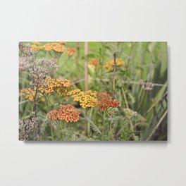 Flowers in Leuven Metal Print