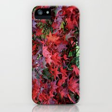 The Color Of Fall Slim Case iPhone (5, 5s)