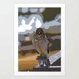 Chicken Hawk Starring Down At Me Art Print