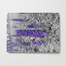 Purple Balboa Metal Print