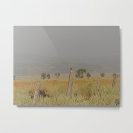 Bird perched after the rain at sunset Metal Print